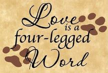 "Love is a Four Legged Word / Thank you for following my board. Please be considerate with your pinning and do not ""raid"" my board(s).  Pin courtesy is greatly appreciated. Thank you. ❤️ / by Cheryl"