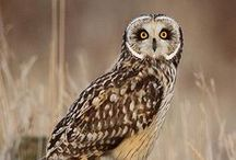 Owl Obsession / by Cheryl