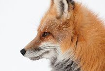 Foxy Loxy / Thank you for following my board. Please pin politely and keep your repins to no more than 10 a day. Thanks. ❤️ / by Cheryl