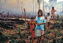 12GEO: deforestation / 91246 - Global Issue