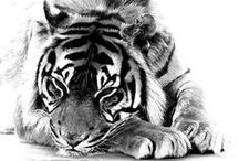 B I G  //  C A T S / The beautiful feline animal that inspires us all so much. Majestic, powerful and wild.