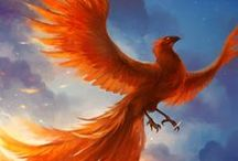 Beast ● Phoenix