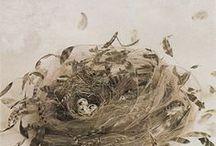 eieren en nesten / eggs and nests / inspiration / by Cigale Méditerranéenne