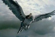 Beast ● Hippogriff