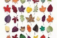 Herbst: Blätter, Früchte, Igel,... / by Silvia