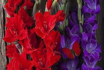 Red and Purple / by Jackie Pestell
