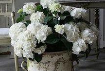 Planten Wit & Geel