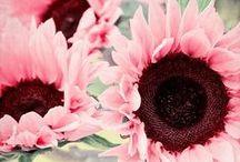 Planten Roze