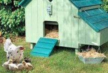 Tiiiiiitas, titassss / todo lo que tiene que ver con el mundo de la gallina. sus jaulas, cuidados, razas, comida, lugares donde se encuentran mejor...