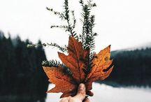 /Autumn leaves