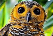 Wild Animals  / #moose #owls #birds #snakes #apes #whales #giraffe