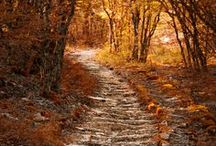 Autumn  / by Charla's artistsoul