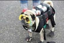 Cute pug clothes and costumes / Pugs wearing all types of clothes and costumes.
