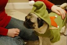Fabulous Pug Holiday Costumes! / What better way is there to get into the holiday spirit than to check out pugs in some pretty awesome festive attire?