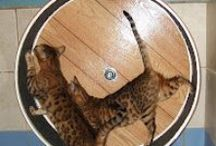 DIY  cat furniture/cat houses / DIY Projects & great Ideas For Cats / by Donna Bartley