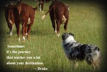 Working Dogs / Mainly Australian Shepherds, some other breeds, working livestock and quotes, etc.