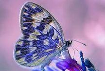 Wings of Beauty / From Butterflies to Birds