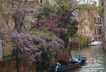 "Spring in Venice / Spring is coming... also in Venice! Turning the city's ""campi"" and ""calli"", the signs of the new season emerge from unexpected corners. And you? What are you waiting to visit Venice?"