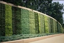Vertical Gardens / Creating Vertical Walls will not only provide cleaner air in the cities. It might be used for edible stuff or just to help ecological systems to survive in cities -- food for thought.