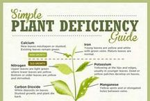 Deficiencies/Over-Fertilize/NPK
