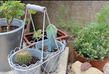Jardinagem / Natureza