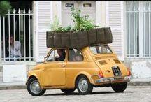 O R C H A R D / #orchard #allotment #plants #green #huerto #garden
