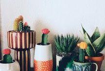 P L A N T I E S / #plants #green #hanger