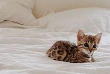 A N I M A L S / #animals #fauna #cat #dog #rabbit