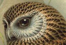 OWL / owl, bird, animal, art, celtic, fantastic, shamanic, magic / by Göknur Eser Türkmen