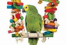 DIY ideas for parrots