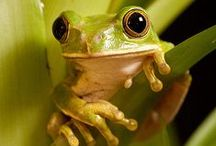 Frogs Camping & RV / Frogs