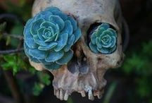 ★★★ SKULLS ★★★ / All Things SKULLS, BONES And SKELETONS. Become A Contributor And Add All The Pins You Want To This Board. Please Do NOT Invite Anyone Else. Happy Pinning. COUNTRYMOM. / by COUNTRYMOM