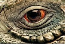 ★★★ EYE SEE YOU ★★★ / Boards About Eyes Of All Kinds. Animal , Human And Photoshop. Only Close Ups Of Eyes. NO Complete Faces. Eyes Only. Become A Contributor And Add All The Pins You Want To This Board. Please Do NOT Invite Anyone Else. Happy Pinning. COUNTRYMOM. / by COUNTRYMOM