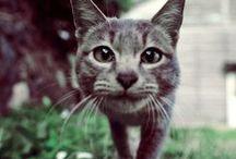 Cutie -.^