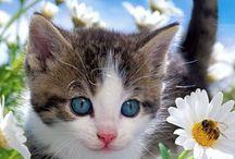 Puppies ❤️cute Kittens / Puppies and kitties