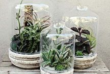 Interior Inspiration: Plants