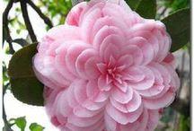 Beautiful flowers :)