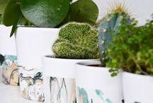 DIY: Pflanzen / Schöne DIY Ideen für und mit Pflanzen. Übertöpfe, Pflanzideen oder Pflanzen als Motiv - Hauptsache Grün!