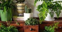 kasvit & ruoka