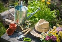 A Frugal Lawn and Garden / Make your lawn or garden look it's best without spending a fortune.