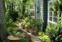 Garden / by Cindy Wenrich