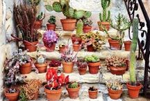 Cacti - found a new hobby.