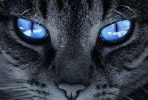 Aristocats / Feline