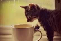 We all love coffee / Not just humans