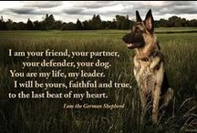 German Shepherd / by Sandra Revet Loohuis
