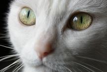 cat! cat! cat!
