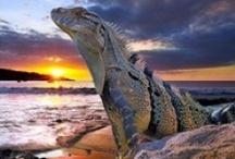 Reptiles, Amphibians, Herpetological / by Debbie Chandler