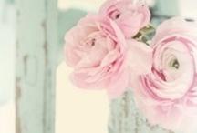 Blumen { rose - purple }