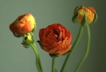 Blumen { bunt }