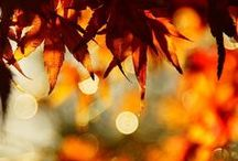 AUTUMN / BEAUTYFUL